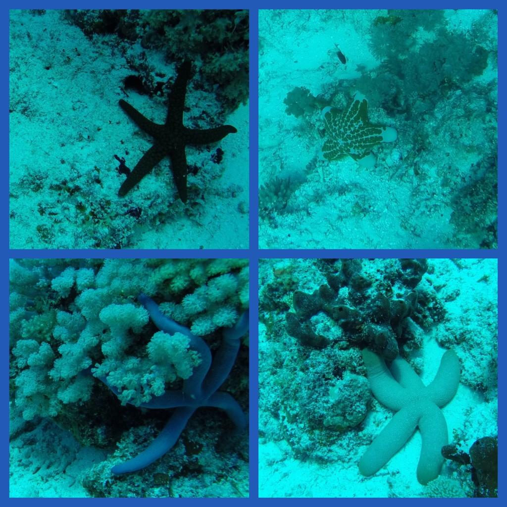 Diving, starfish in Zanzibar
