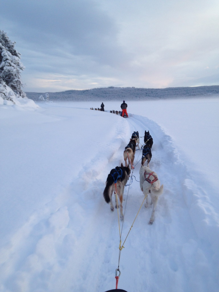 dog sledding Beito husky tours