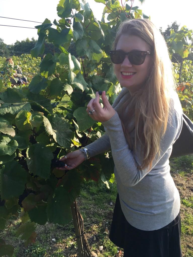 wine tasting in Cambridge