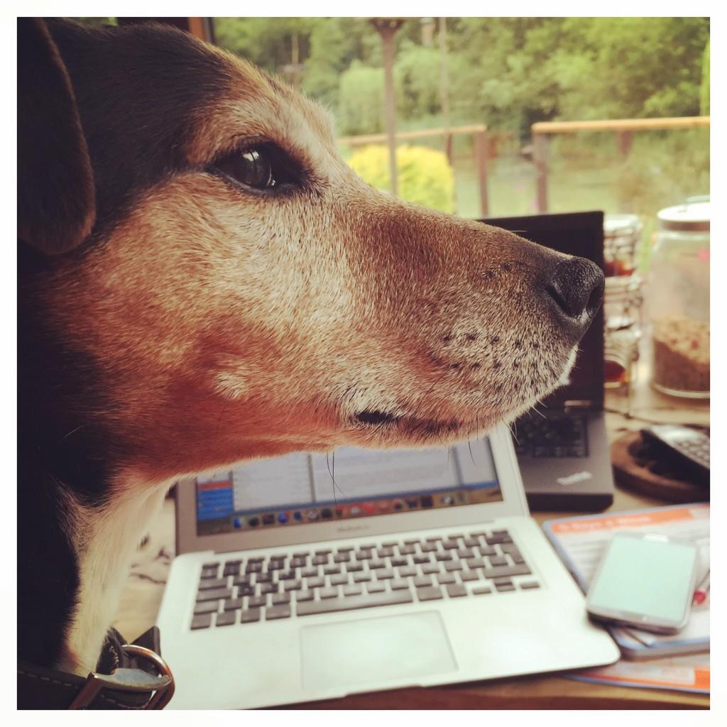 Baxter the Legend freelance