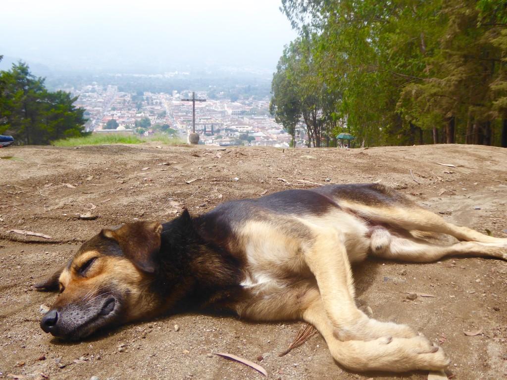 Lazy dog at El Cerro de la Cruz