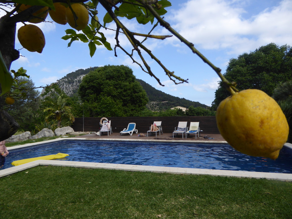 lemons at Travelopo villa