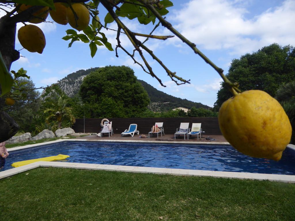 lemons at Travelopo villa
