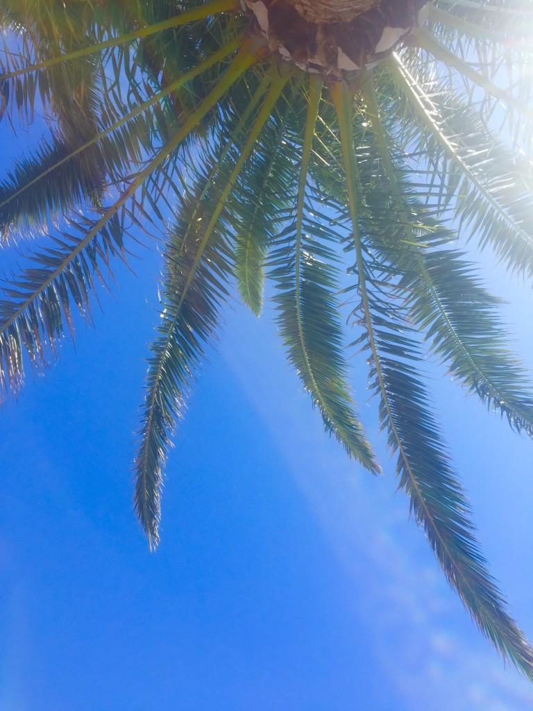 San antonio Ibiza palm tree