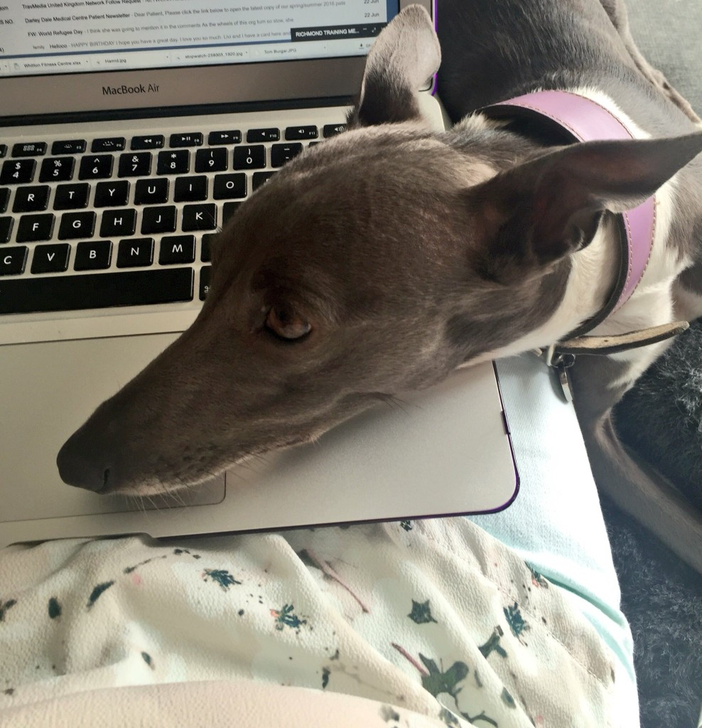 work distractions from Marvellous Millie