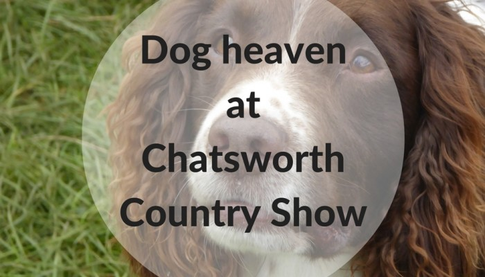 dog heaven at chatsworth country show