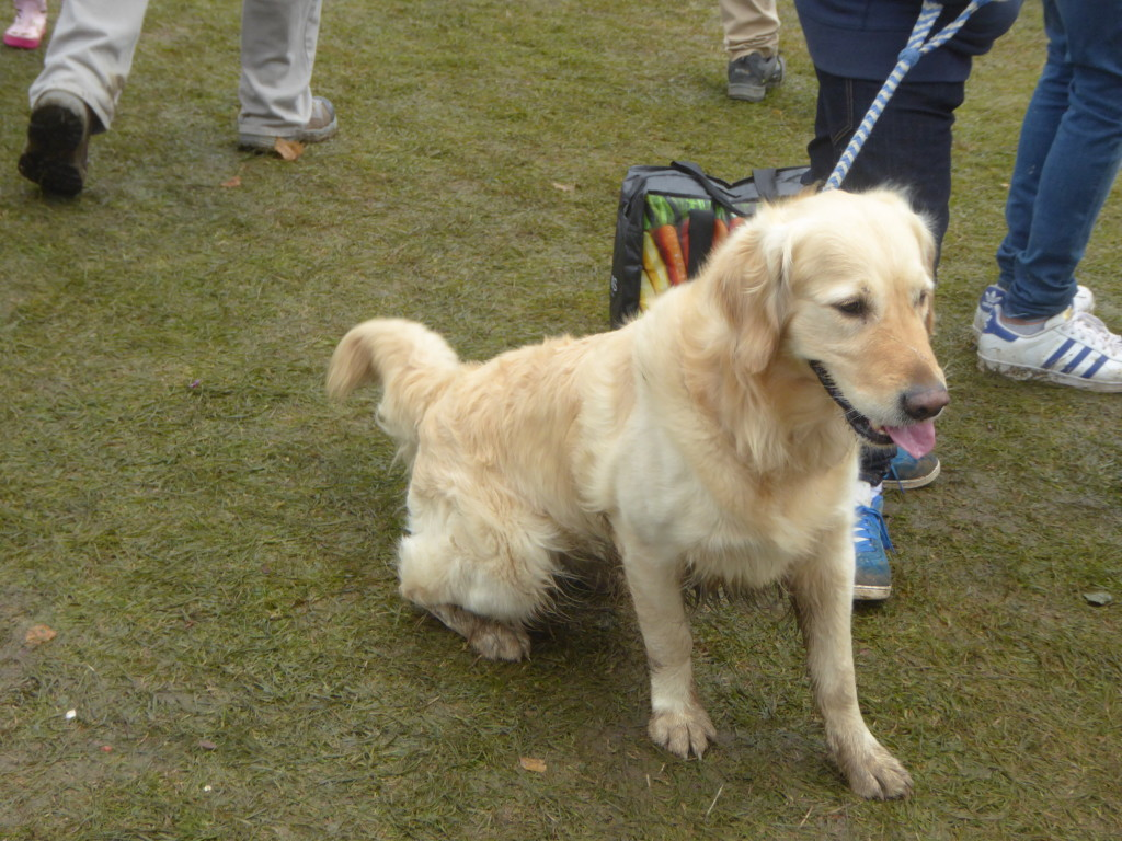 dogs at Chatsworth Country show 2016