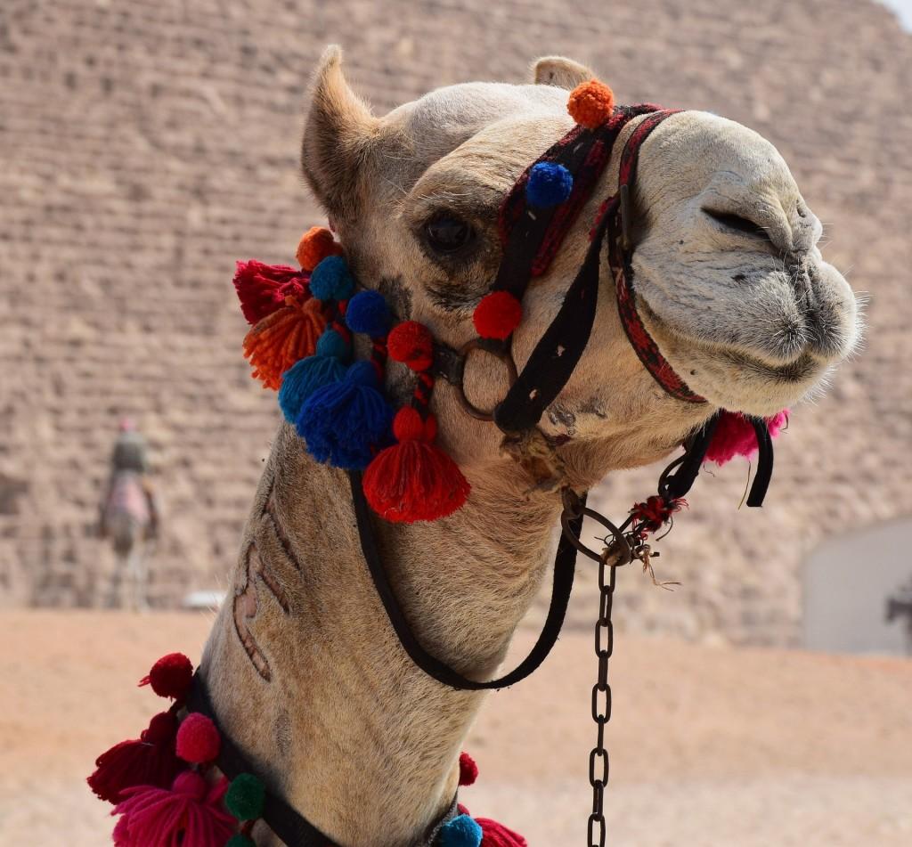 camel-1378571_1920