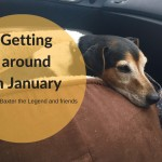 She Gets Around, January plans. Baxter the Legend
