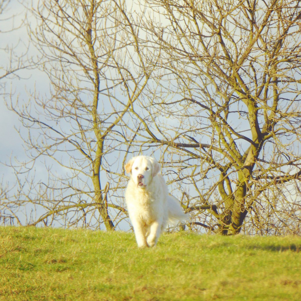 Ben Saynor running in Derbyshire, dog