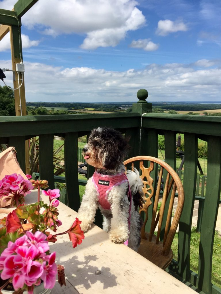 Dog friendly things to do Isle of Wight