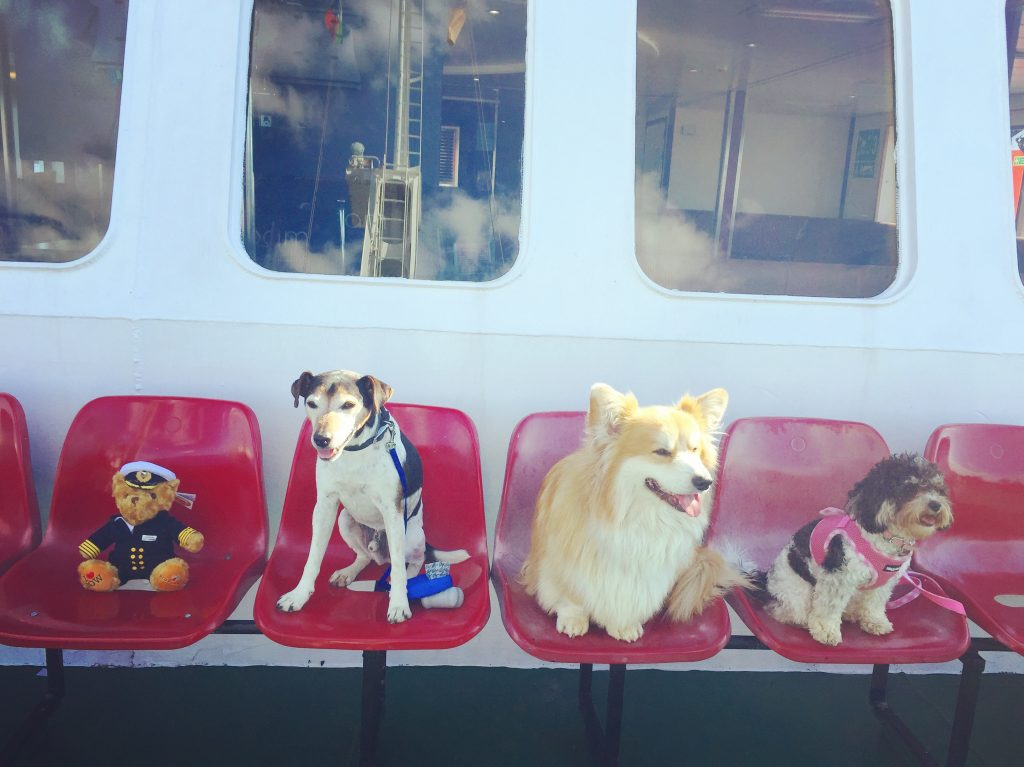 Baxter the Legend and Friends on Red Funnel Ferries
