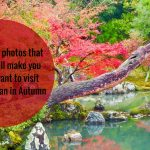 20 photos that will make you want to visit Japan in the Autumn