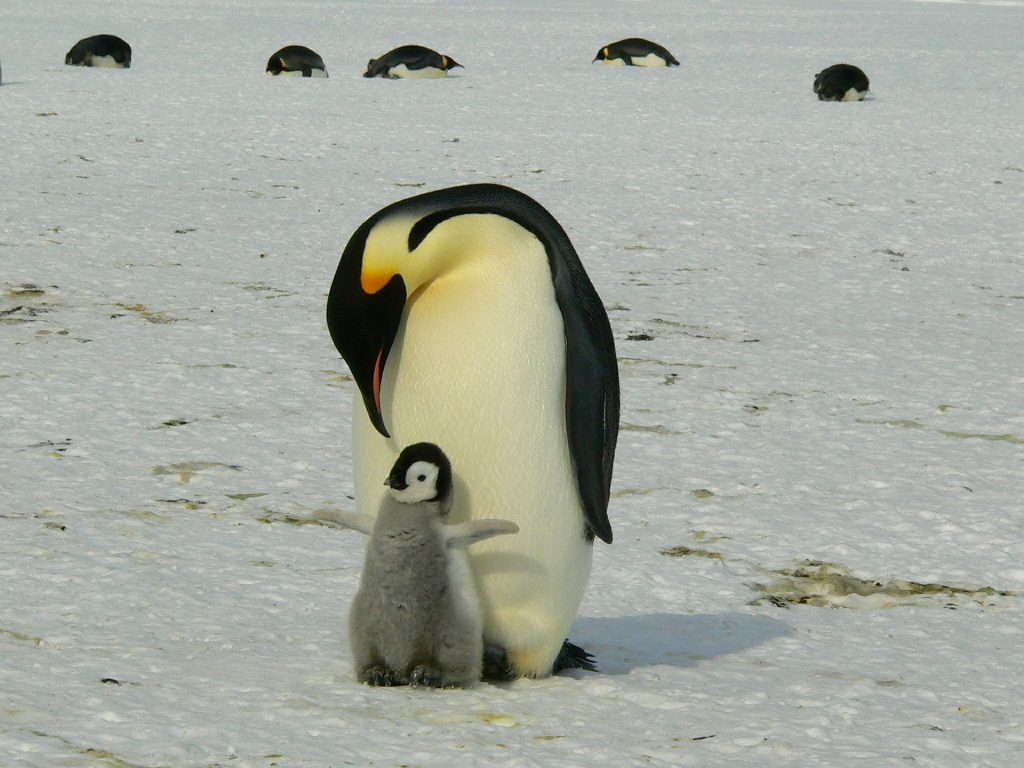 penguins - gap year ideas