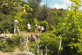Hiking in Andros - WATERMILLS OF FROUSSEOI - Route 14