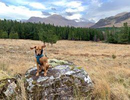 Knoydart, Scotland dog friendly holiday
