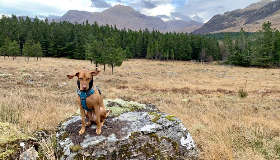 The best dog friendly holiday in Knoydart, Scotland