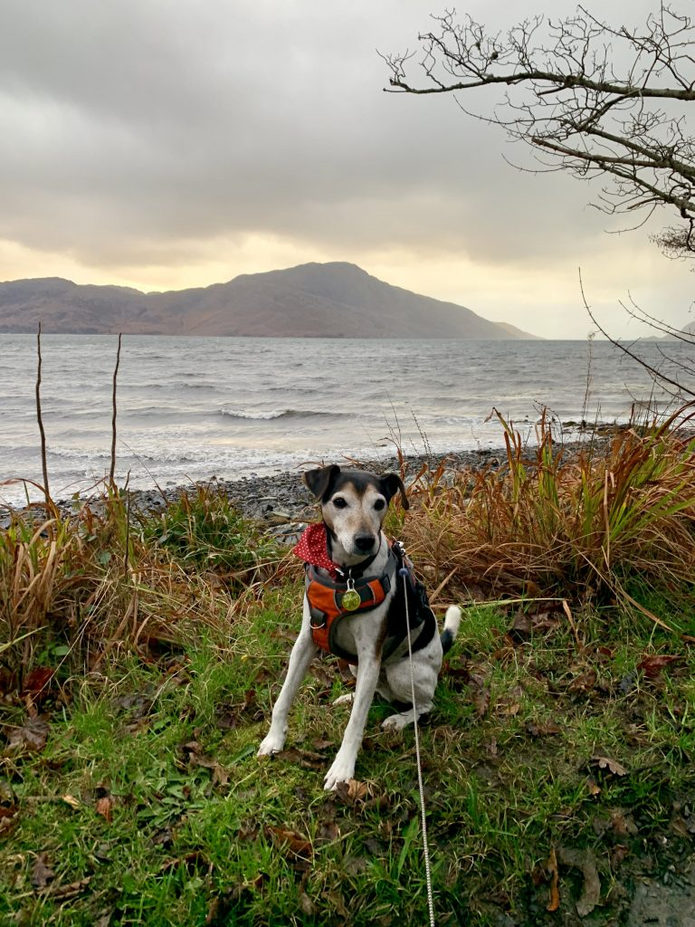 Knoydart, Scotland dog friendly holiday