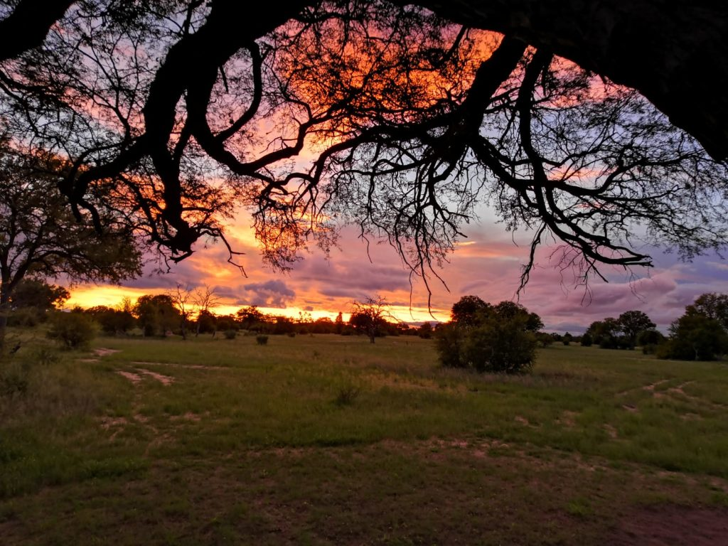 Self Isolating in the Zimbabwean Bush - Hannah Tranter