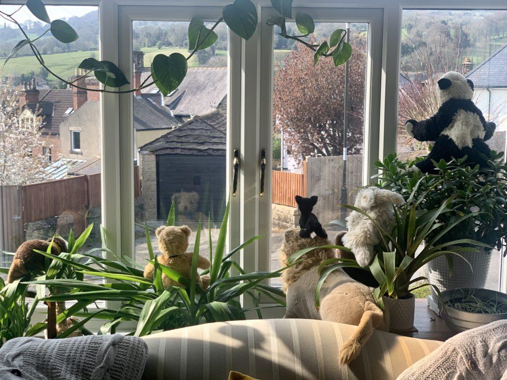 Photos of Matlock in Lockdown - teddy bears in the window