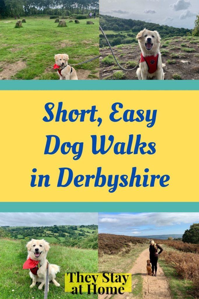 Best dog walks in Derbyshire