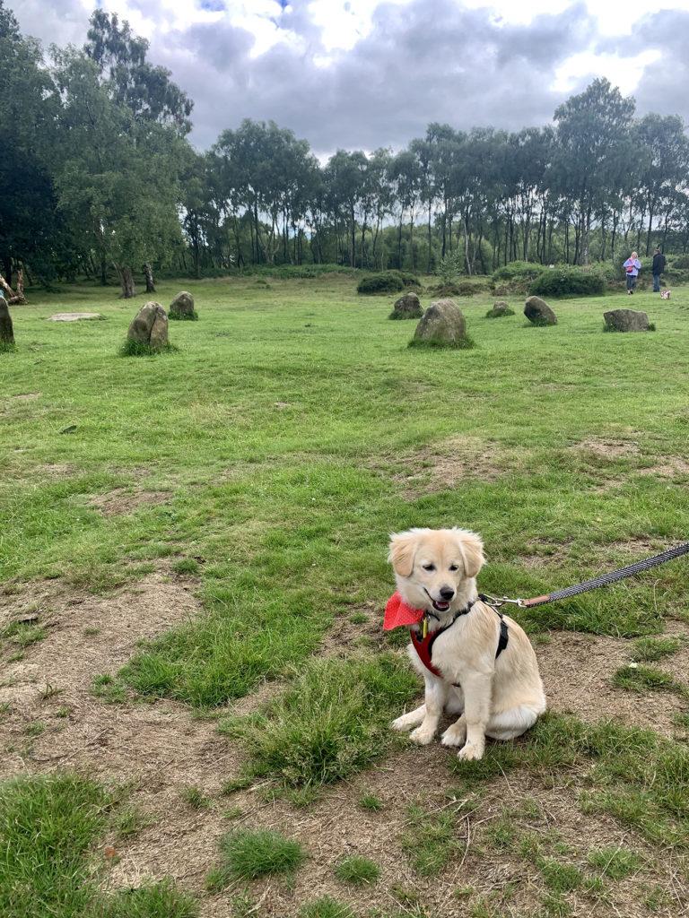 5 Best dog walks in Derbyshire - Stanton Moor, 9 ladies