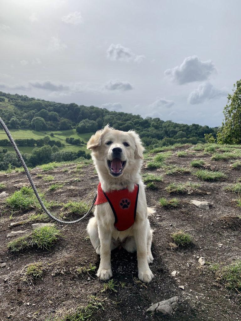 5 Best dog walks in Derbyshire - High Tor, Matlock