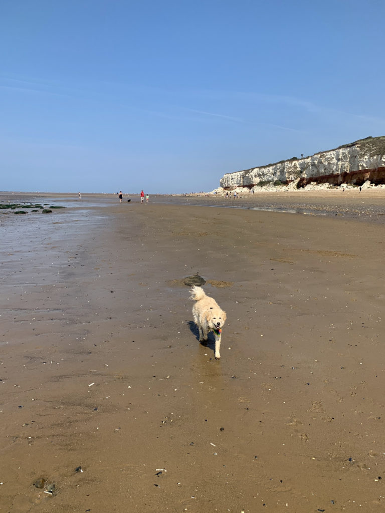 the lighthouse cafe, hunstanton beach - dog friendly places to eat