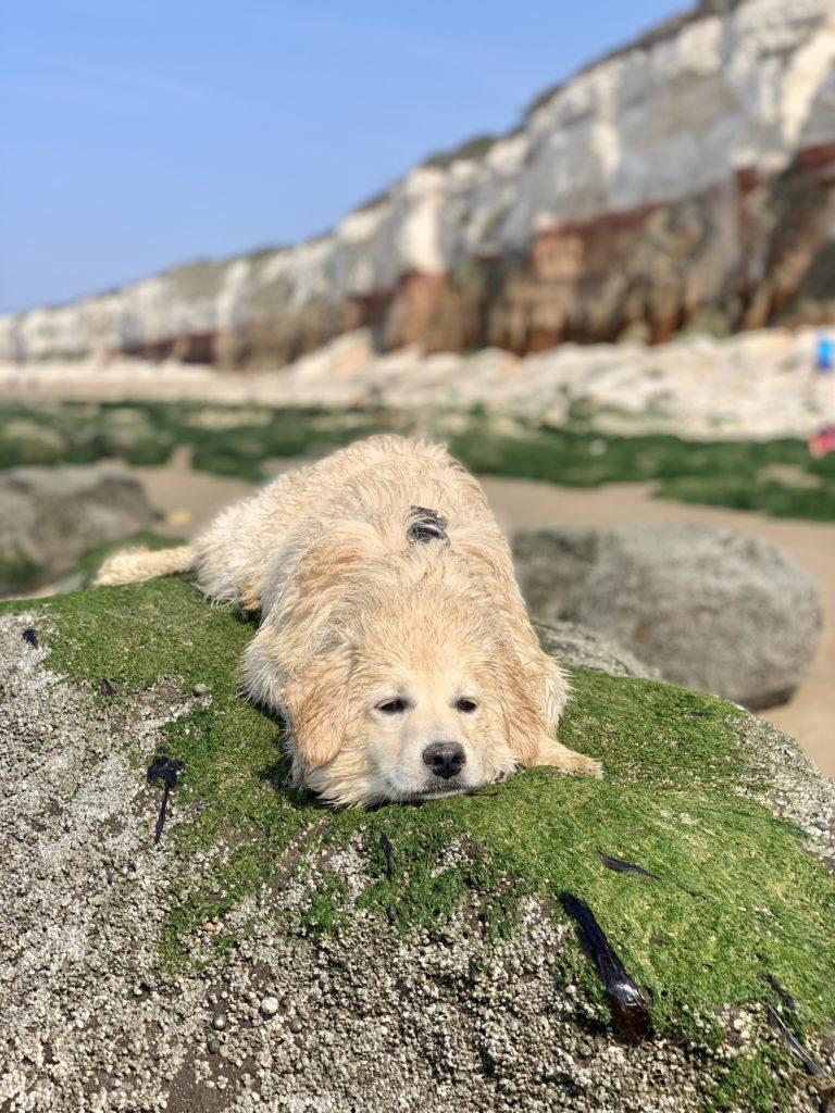Hunstanton Beach - Dog friendly holiday on the Norfolk Coast