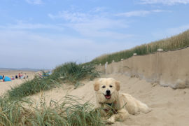 Brancaster Beach - A Dog Friendly holiday in Norfolk