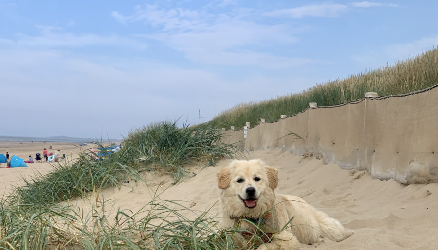 A Dog Friendly Holiday on the Norfolk Coast