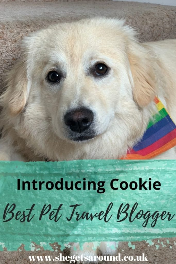Best Pet Travel Blogger - Cookie