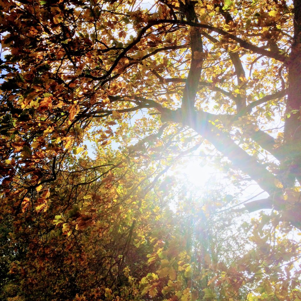 Top Things to Enjoy about Autumn Walks
