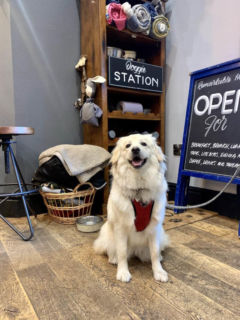 Dog friendly restaurants in Matlock