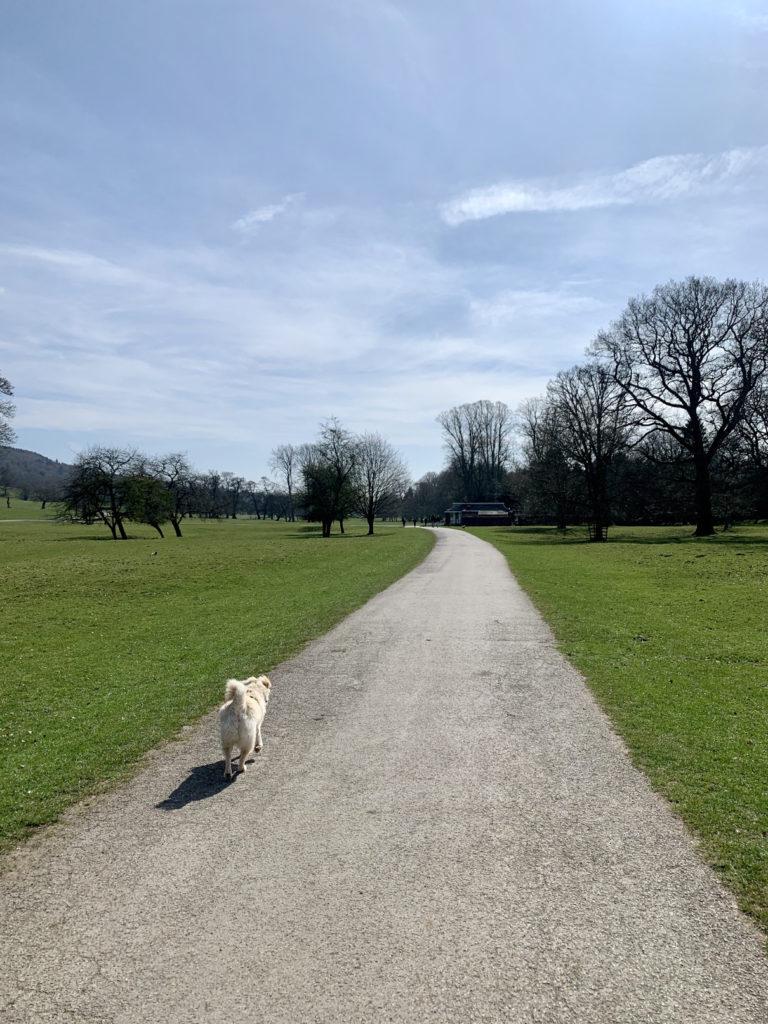Walking from Baslow to Chatsworth - short walks around Chatsworth