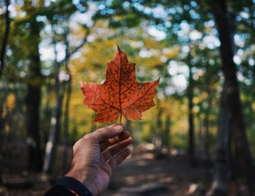 All you need to know to get a Canadian Visa